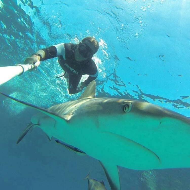 """Christian Redl """"Mein Sportschnappschuss des Jahres!""""  Vielleicht nicht gleich erkennbar als Sport - aber Freitauchen/Apnoetauchen ist sicherlich ein cooler Sport und die Kombination mit den Haien ein Hailight - Voten und/oder auch sich selbst nominieren unter http://www.facebook.com/groups/Sportsblogged"""